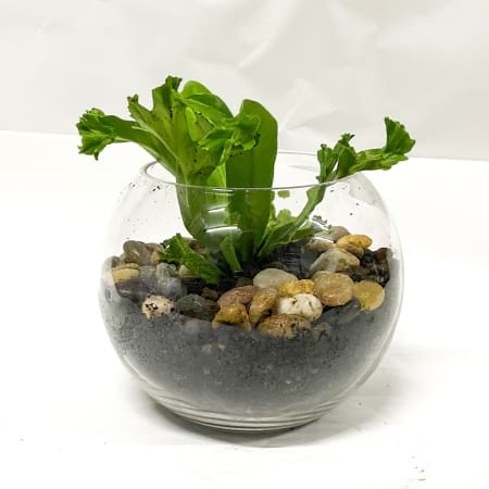 rainforest indoor plant terrarium - small