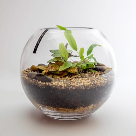 rainforest indoor plant terrarium - large