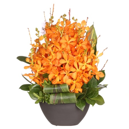premium cut flower orchid arrangement