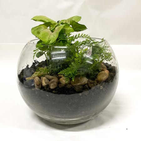 rainforest indoor plant terrarium - medium